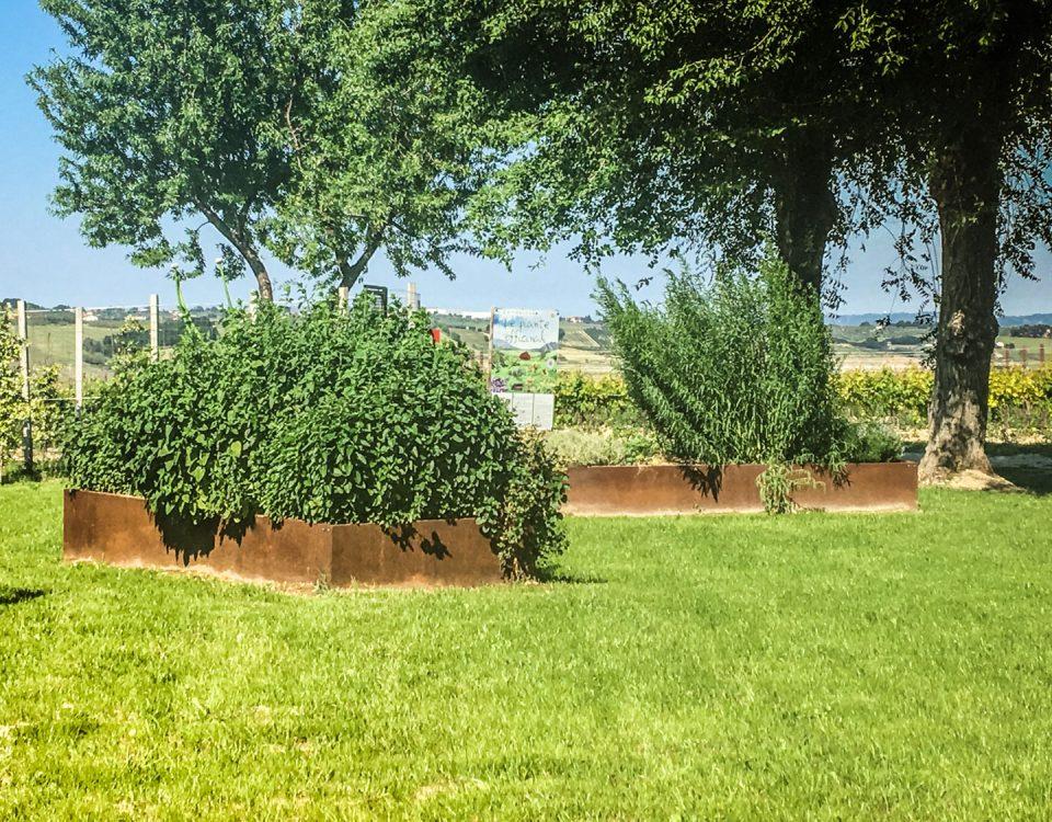 bordure giardino con piante aromatiche