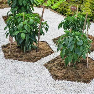 bordure giardino per piante aromatiche